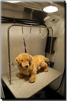Dog Water Bottle >> Hanvey Grooming Vans & Sprinter Mobile Grooming Van (and Grooming Trailers too!) by Hanvey ...
